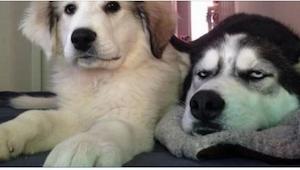 12 fotografií psů v ideálním okamžiku… Jejich pohledy mluví za všechno!
