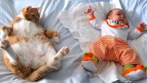 Máte dítě a chcete si pořídit kočku? Dřív, než se rozhodnete, podívejte se na ty