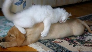 20 koček, které si myslí, že pes je ten nejlepší polštář na světě. Číslo 18 nás