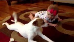 Neuvěříte, co udělal tento pes, když spatřil, že holčička leze po koberci!