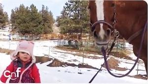 To, jak tento majestátní kůň na slovo poslouchá tuto malou holčičku, je k nevíře