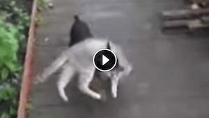 Žena žádá psa, aby šel ke kočce. A výsledek? Nemůžeme se přestat smát!