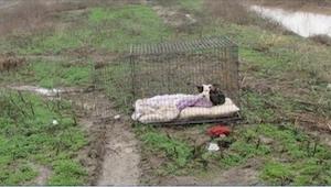 Pes zamčen v kleci se v dešti třásl zimou a čekal až se jeho majitelé vrátí. To,