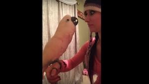 Tenhle papoušek si stěžuje své majitelce. Tohle je to nejlegračnější video, jaké