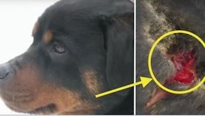 Majitelku vyděsilo, že jí kousnul její pes. Až za okamžik jí došlo, co se vlastn