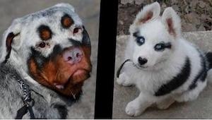 11 výjimečných psů… jen se na ně podívejte!