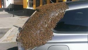 Celé 2 dny roj včel létal kolem auta této ženy. Důvod překvapil i samotné včelař