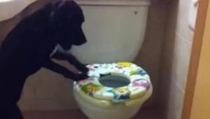 Majitel potají natáčí svého psa, když jde do koupelny. V 0:16 videa nemůžeme uvě