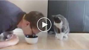 Sledujte geniální reakci kočky, když její majitel předstírá, že jí bere misku s