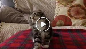 Když začala hrát písnička, její kočka udělala něco úžasného!