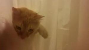 Tato kočka něco chce a udělá všechno pro to, aby toho dosáhla… Přesvědčte se sam