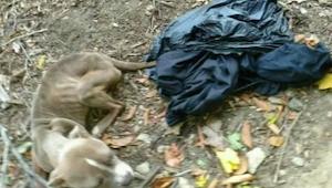 Žena našla psa v koši. Když policie zjistila, kdo je jeho majitel, byla v šoku.