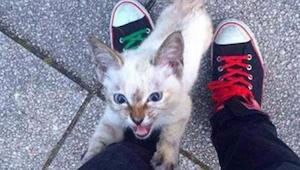 Toulavé koťátko přiběhlo k muži a nehnulo se od něho ani na krok - máme slzy v o