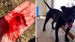Když žena zjistila, co právě snědl její pes, okamžitě zavolala policii!