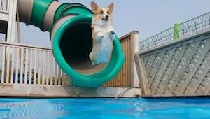 Máte špatný den? Sledujte, jak si tito pejsci hrají u bazénu - úsměv zaručen!