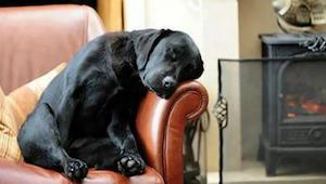 Adoptoval psa z útulku a spolu s ním dostal dopis od předchozího majitele - obsa