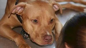 Co to znamená, když se o vás pes opře nebo se vám dívá hluboko do očí? Zjistěte