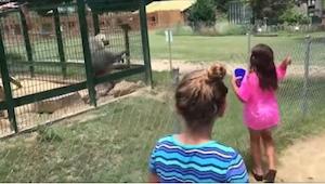 Dívky provokatérky a rozzuřený pavián… Muselo se to tak skončit!