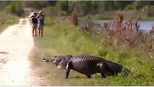 To, že natočili aligátora, je jedna věc. Povedlo se jim zaznamenat ještě něco ji