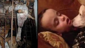 Tohoto psa chovali na maso. Když ho vysvobodili z klece, odhalili něco úžasného.