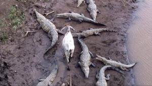 15 fotek, které dokazují, že zvířata nevědí, co je to ostuda, slušné chování neb