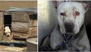 Pes měl být na řetězu přes 2 roky, zatím co byl jeho majitel ve vězení. Všechno