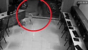 Muž se chtěl kopnout toulavého psa, ale v 8. vteřině kamera zaznamenala spravedl