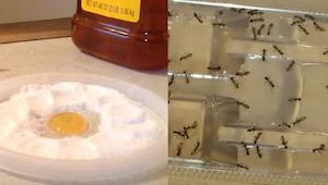 Žádní další švábi, blechy a mravenci v domě, díky této látce se jich zbavíte nav