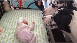 Co se stane, když necháte miminko se psem? Podívejte se!