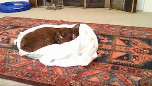Předtím, než pohřbil kočku, nechal ji v pokoji a zapnul kameru, za okamžik jsem
