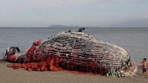 Na břehu našli mrtvou velrybu. Když uviděli, co se skrývá uvnitř, nemohli skrýt