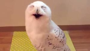 Už jste někdy slyšeli, jak se směje sova? Zní to… koneckonců, přesvědčte se sami