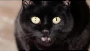 Podívejte se, co se stane, když budete spát s kočkou v jedné posteli. Vždy jsem