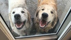 12 psů, kteří přenesli hraní se v blátě na novou úroveň - číslo 8 nás pobavilo k