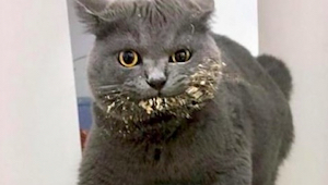 Po prohlédnutí těchto 15 fotek pochopíte, proč se kočky chovají právě takhle… ;)