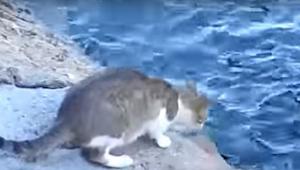 Myslela jsem, že tato kočka skočí do vody. Z toho, co se za okamžik stalo, jsem