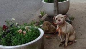 Listonoš si všimnul vyhladovělého psa přivázaného ke stromu - tehdy se rozhodl d
