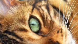 Uhodnete jaké zvíře je na fotografii? Klikněte pro víc informací!