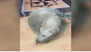 Pes měl být prodán na… maso. Tehdy se ale objevil jistý zákazník.
