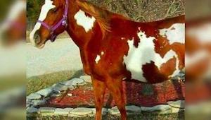 Fotografie tohoto koně vyvolala na internetu senzaci - jen se na něho pozorně po