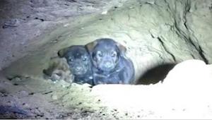 Muž v podzemní noře uviděl 8 štěňátek - za okamžik odhalil něco šokujícího!