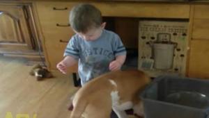 Když začal chlapeček krmit psa, netušila jsem, co se stane už za okamžik!
