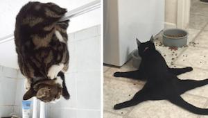 Těchto 12 majitelů zachytilo své kočky v těch nejzvláštnějších okamžicích – to m