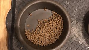 Muž pořídil fotografii poté, co jeho pes nechal polovinu krmiva ve své misce. Dů