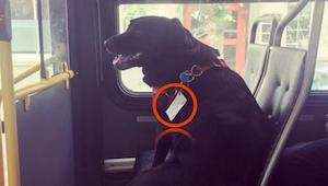 Cestující byli pobouřeni, když uviděli v autobuse psa, dokud si nevšimli TOHO!