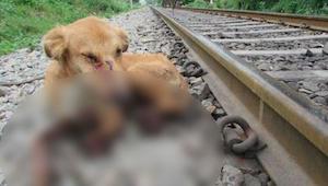 Když našli železničáři tohoto psa, čekalo je těžké rozhodnutí…
