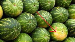 Na co dávat pozor při vybíraní zralého a sladkého melounu.