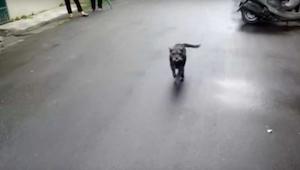 Pes se na 6 dnů ztratil - jeho reakce, když uvidí svého majitele, vás zahřeje u