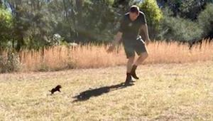 Muž utíká před mládětem tasmánského čerta - sledujte, co se děje když ho drobeče