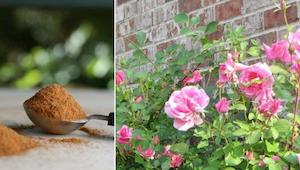Každý zahradník by měl vědět, jak využít skořici!